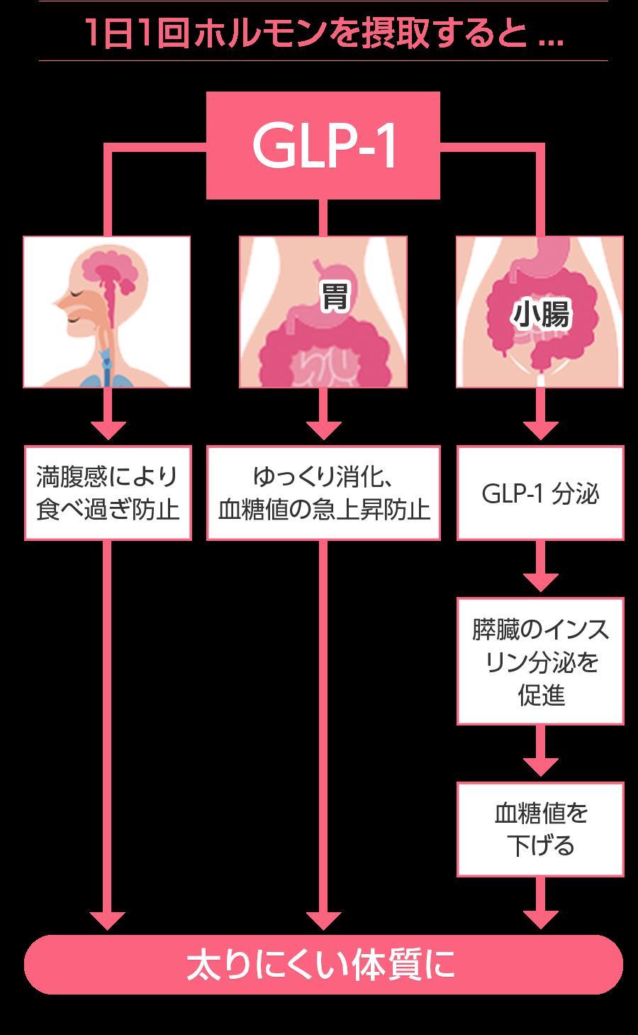 GLP-1の構図